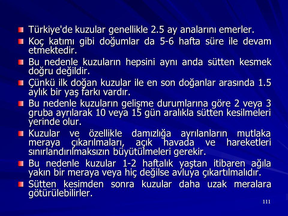 Türkiye de kuzular genellikle 2.5 ay analarını emerler.