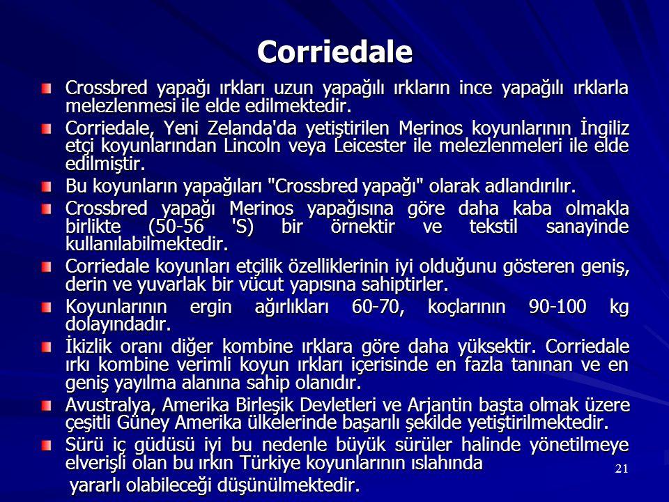 Corriedale Crossbred yapağı ırkları uzun yapağılı ırkların ince yapağılı ırklarla melezlenmesi ile elde edilmektedir.