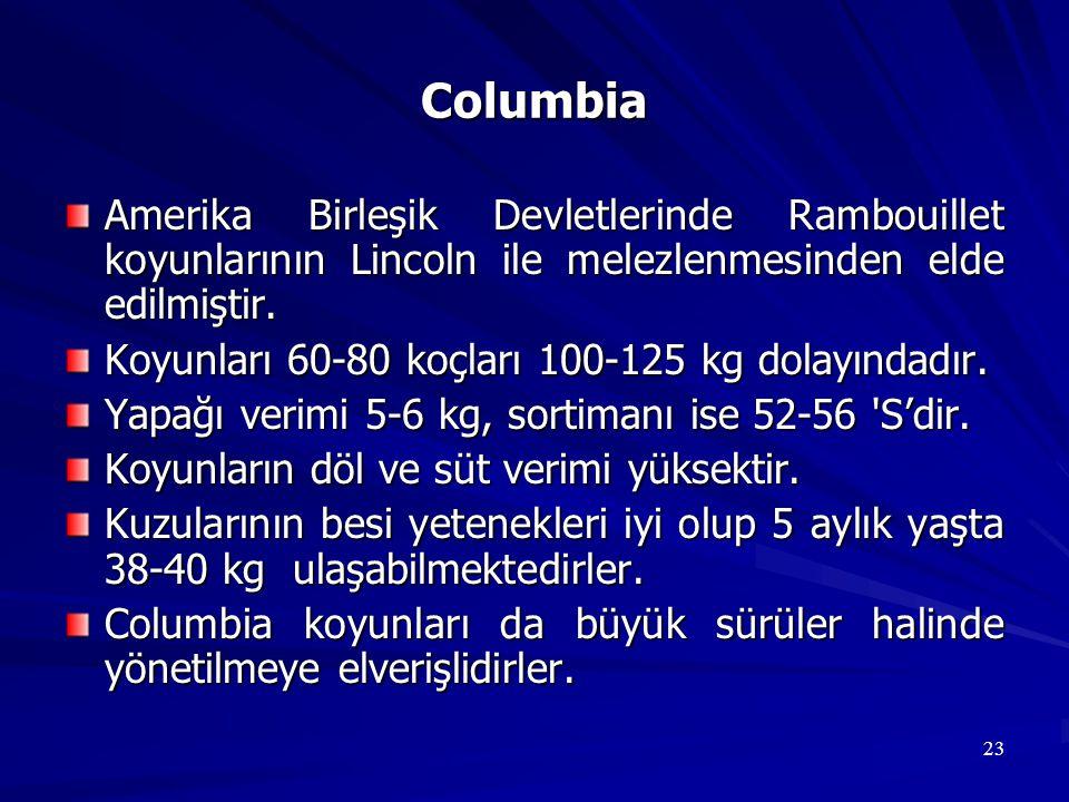 Columbia Amerika Birleşik Devletlerinde Rambouillet koyunlarının Lincoln ile melezlenmesinden elde edilmiştir.