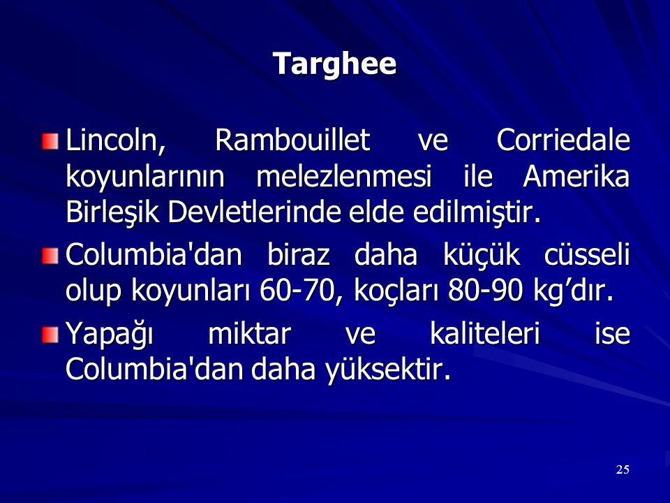 Targhee Lincoln, Rambouillet ve Corriedale koyunlarının melezlenmesi ile Amerika Birleşik Devletlerinde elde edilmiştir.