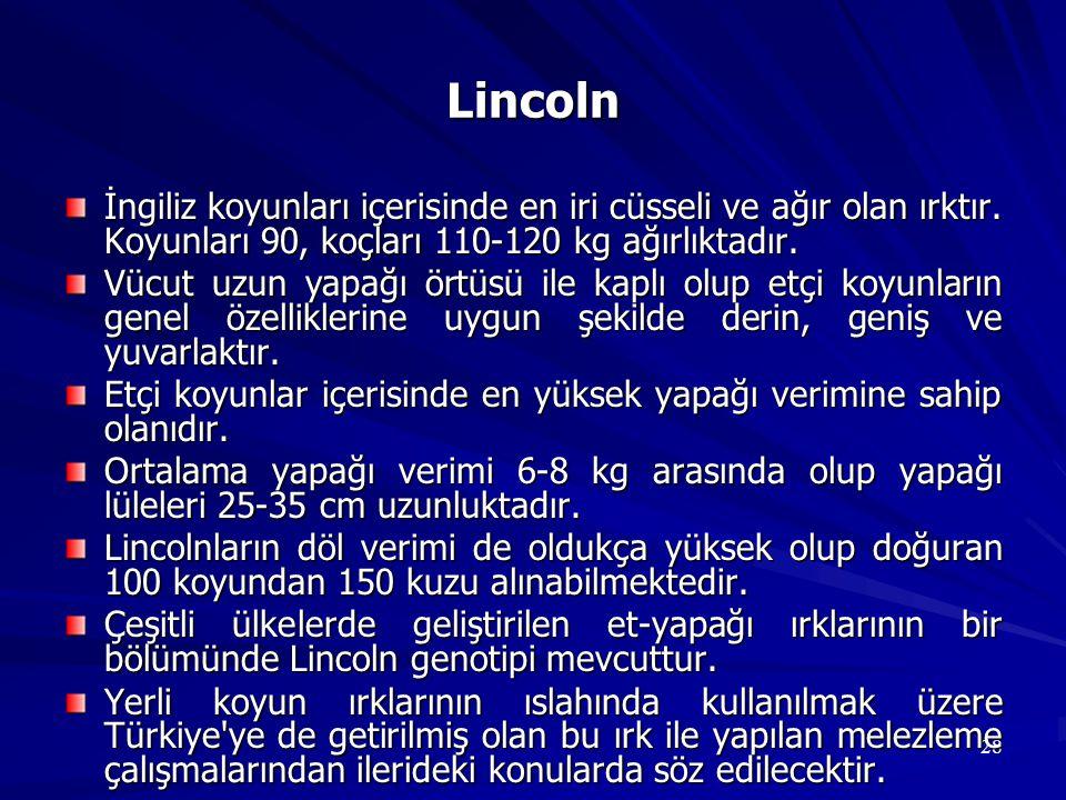 Lincoln İngiliz koyunları içerisinde en iri cüsseli ve ağır olan ırktır. Koyunları 90, koçları 110-120 kg ağırlıktadır.