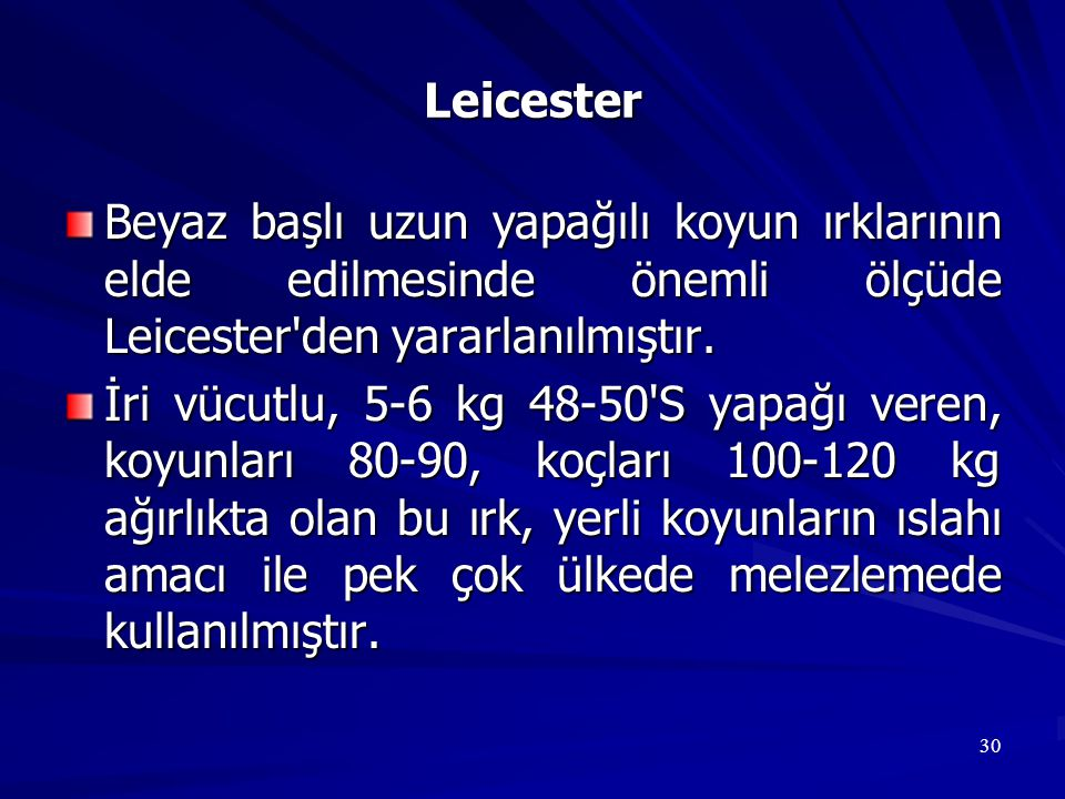 Leicester Beyaz başlı uzun yapağılı koyun ırklarının elde edilmesinde önemli ölçüde Leicester den yararlanılmıştır.