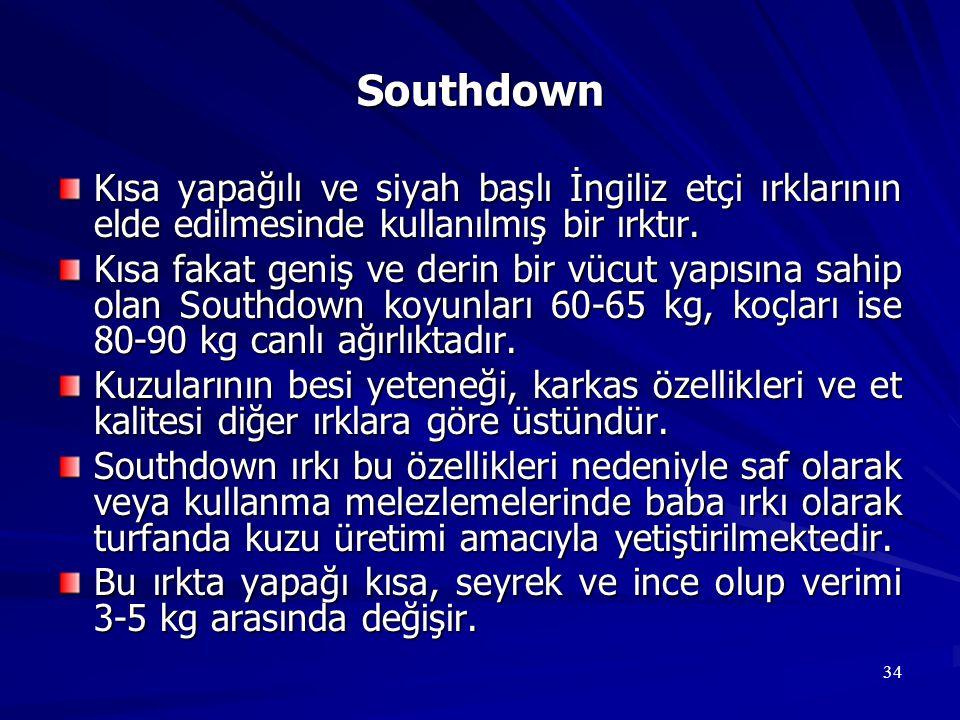 Southdown Kısa yapağılı ve siyah başlı İngiliz etçi ırklarının elde edilmesinde kullanılmış bir ırktır.