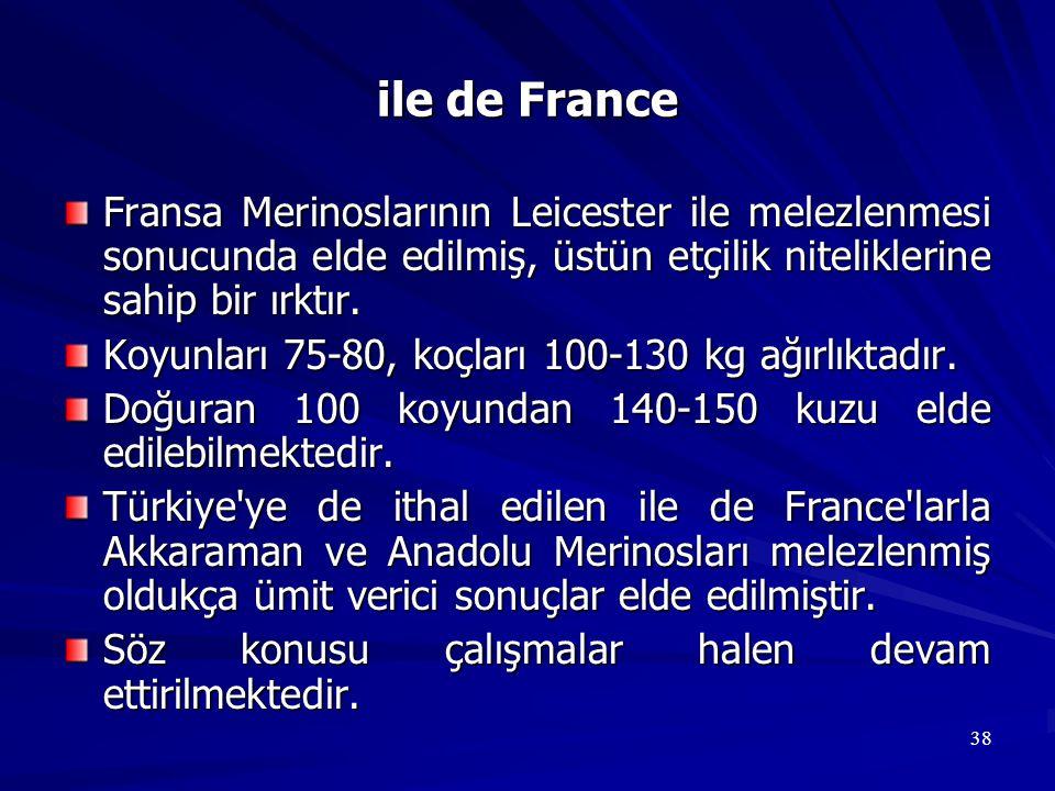 ile de France Fransa Merinoslarının Leicester ile melezlenmesi sonucunda elde edilmiş, üstün etçilik niteliklerine sahip bir ırktır.