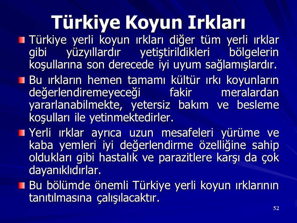 Türkiye Koyun Irkları