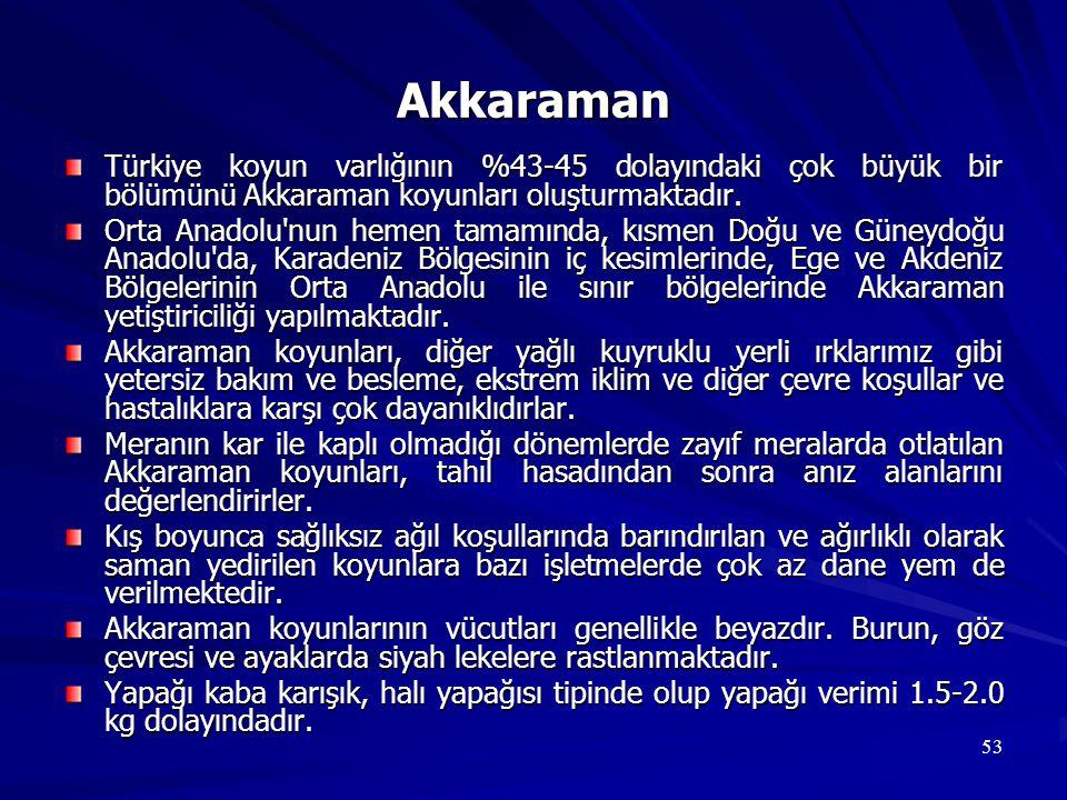 Akkaraman Türkiye koyun varlığının %43-45 dolayındaki çok büyük bir bölümünü Akkaraman koyunları oluşturmaktadır.