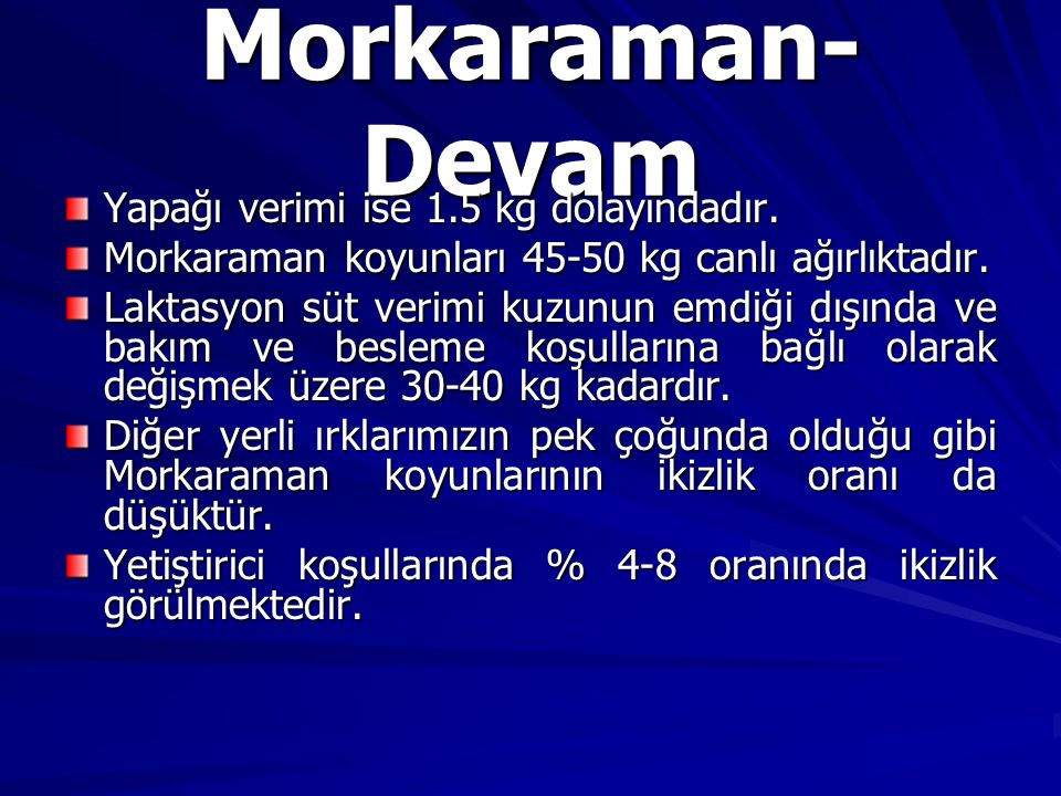 Morkaraman-Devam Yapağı verimi ise 1.5 kg dolayındadır.