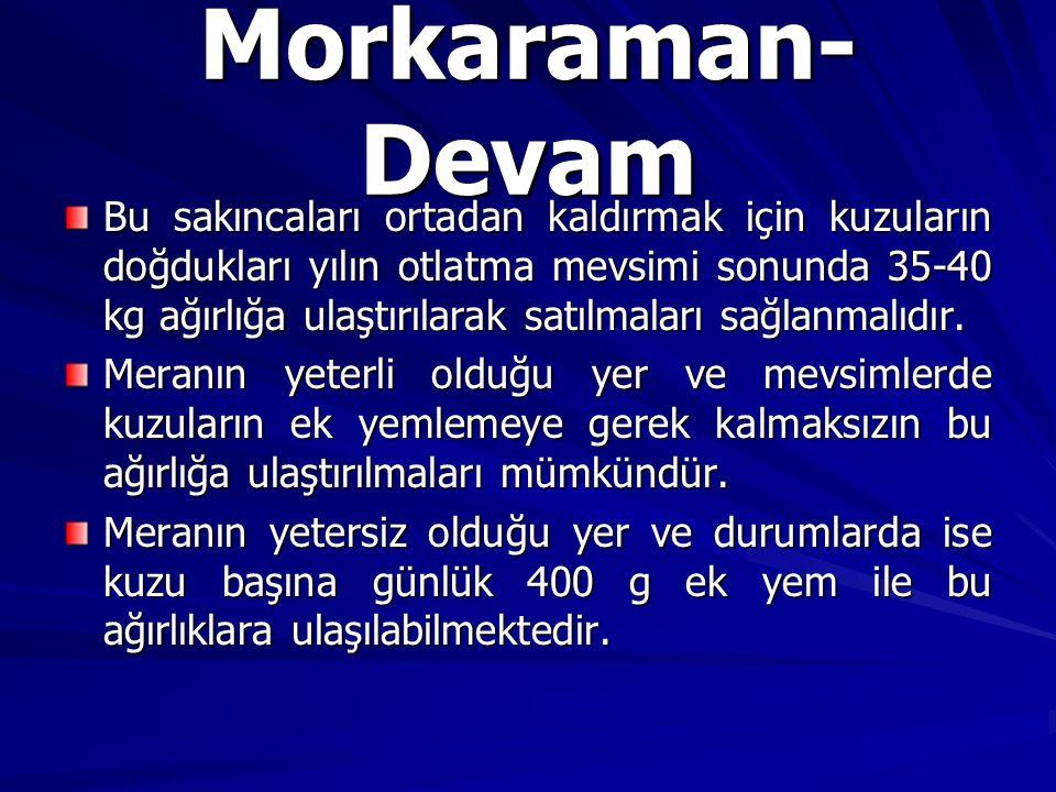 Morkaraman-Devam
