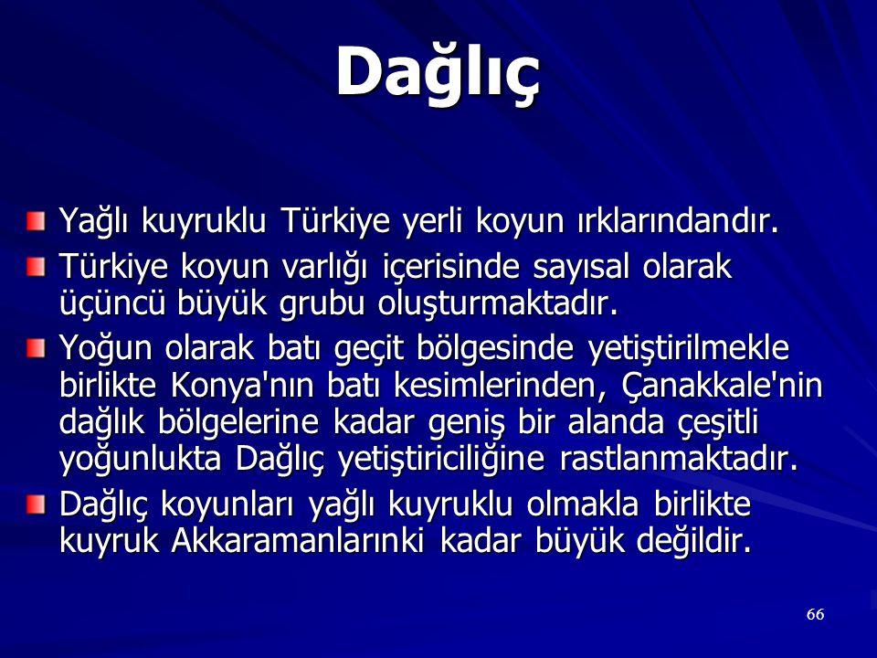Dağlıç Yağlı kuyruklu Türkiye yerli koyun ırklarındandır.