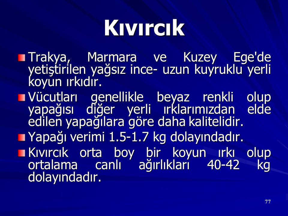 Kıvırcık Trakya, Marmara ve Kuzey Ege de yetiştirilen yağsız ince- uzun kuyruklu yerli koyun ırkıdır.