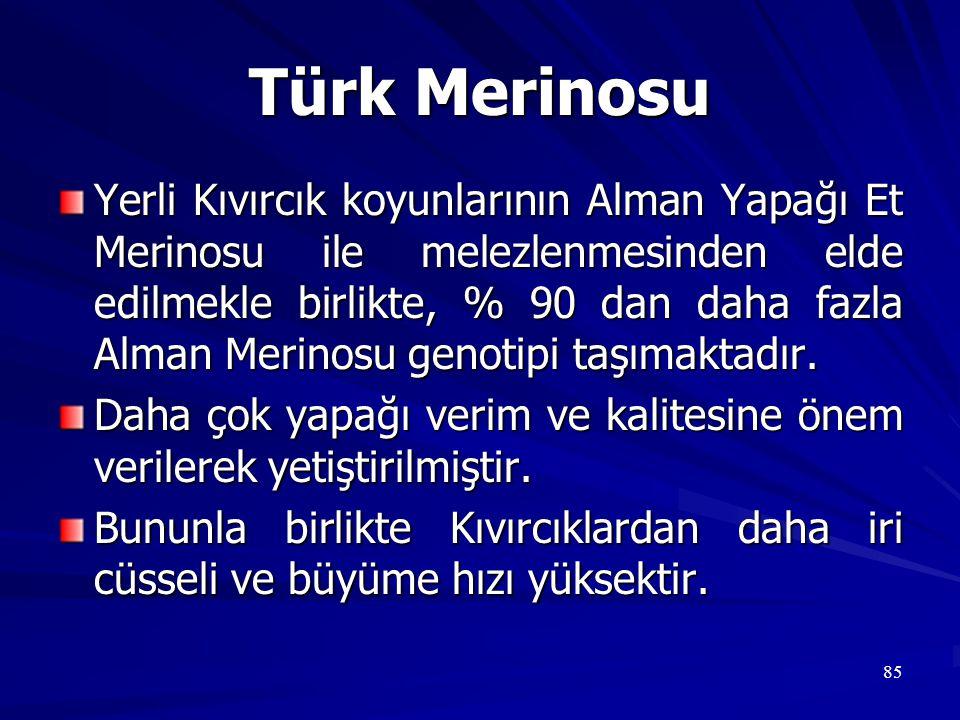 Türk Merinosu