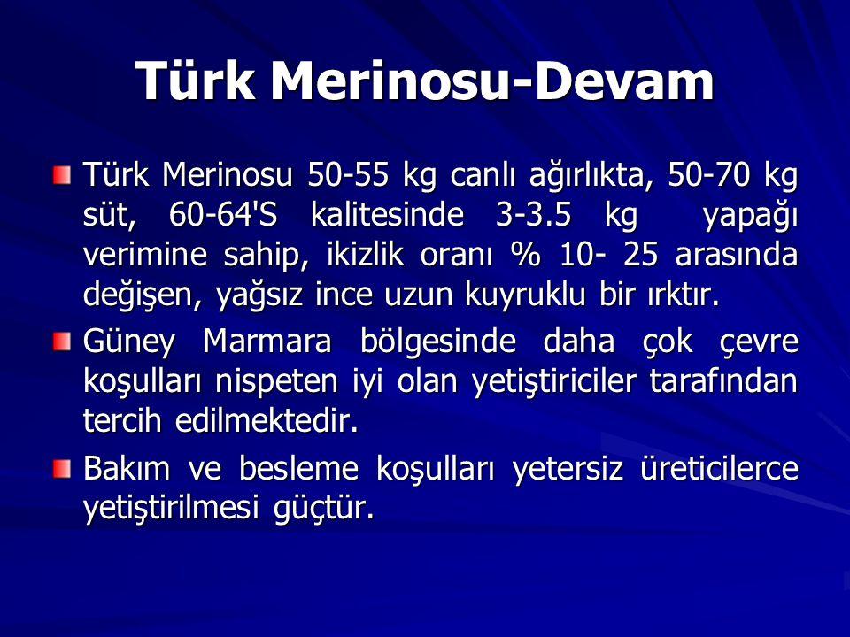 Türk Merinosu-Devam