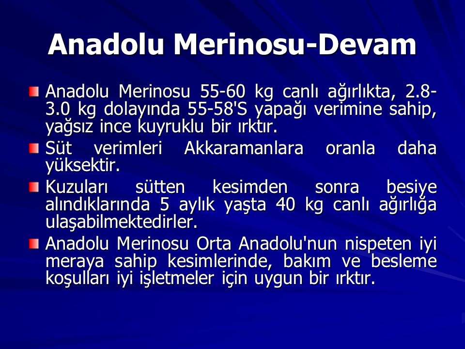 Anadolu Merinosu-Devam