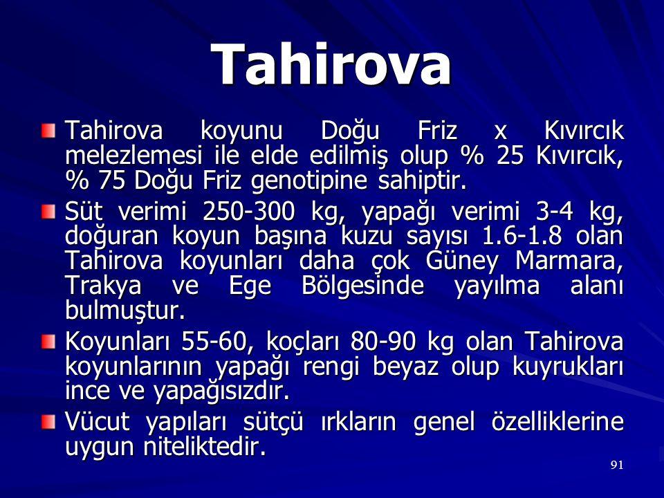 Tahirova Tahirova koyunu Doğu Friz x Kıvırcık melezlemesi ile elde edilmiş olup % 25 Kıvırcık, % 75 Doğu Friz genotipine sahiptir.