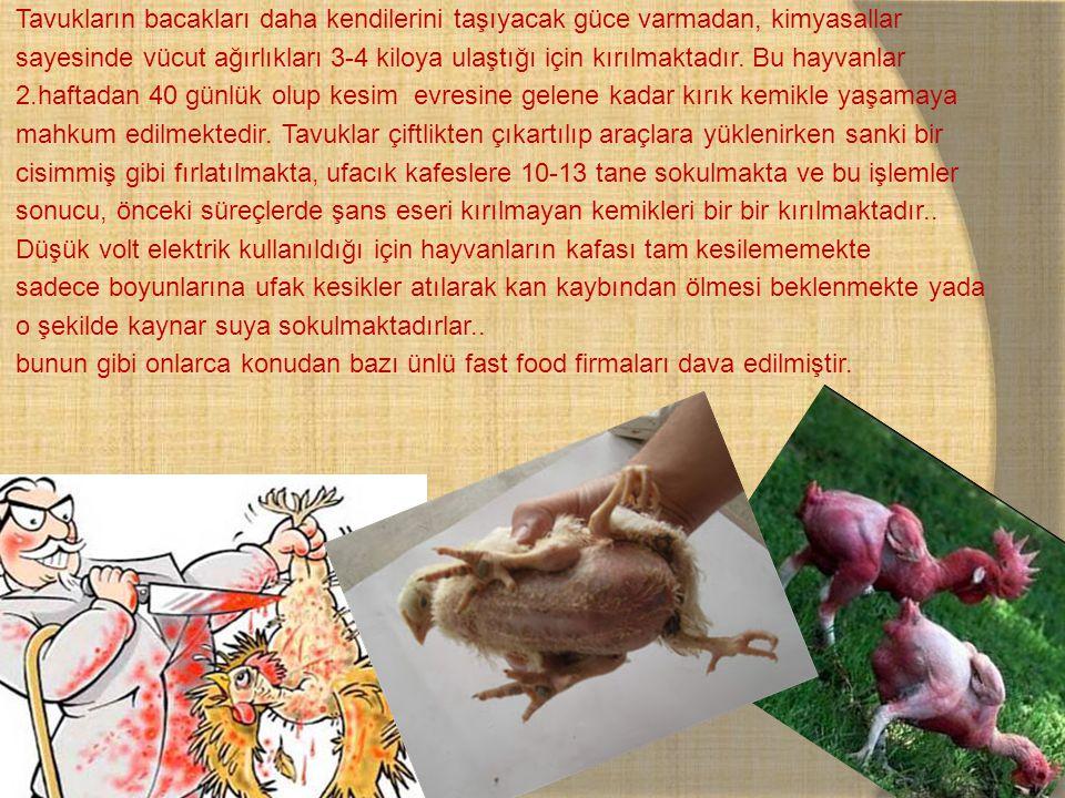 Tavukların bacakları daha kendilerini taşıyacak güce varmadan, kimyasallar sayesinde vücut ağırlıkları 3-4 kiloya ulaştığı için kırılmaktadır.