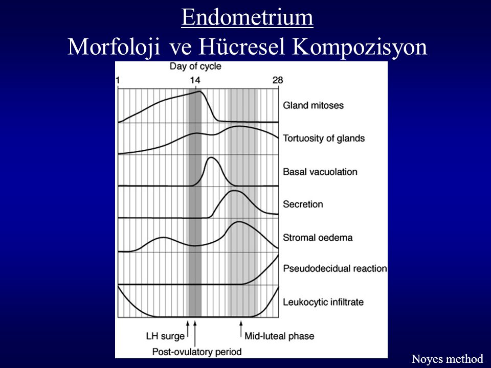 Endometrium Morfoloji ve Hücresel Kompozisyon