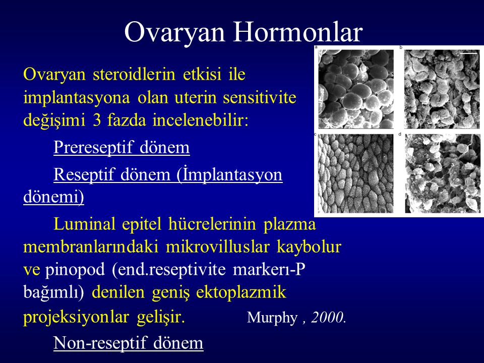 Ovaryan Hormonlar Ovaryan steroidlerin etkisi ile implantasyona olan uterin sensitivite değişimi 3 fazda incelenebilir: