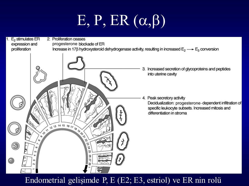 E, P, ER (,) Endometrial gelişimde P, E (E2; E3, estriol) ve ER nin rolü