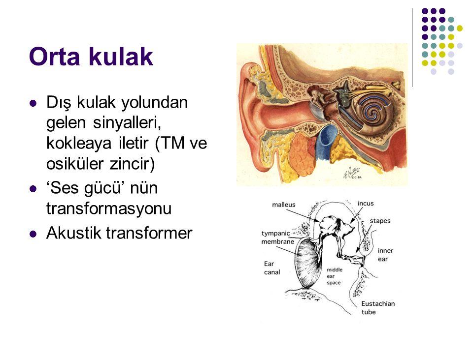 Orta kulak Dış kulak yolundan gelen sinyalleri, kokleaya iletir (TM ve osiküler zincir) 'Ses gücü' nün transformasyonu.