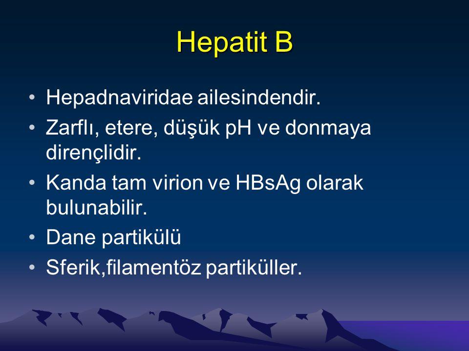 Hepatit B Hepadnaviridae ailesindendir.