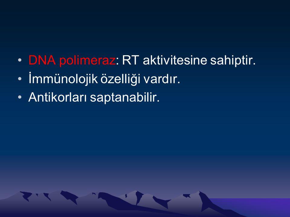 DNA polimeraz: RT aktivitesine sahiptir.