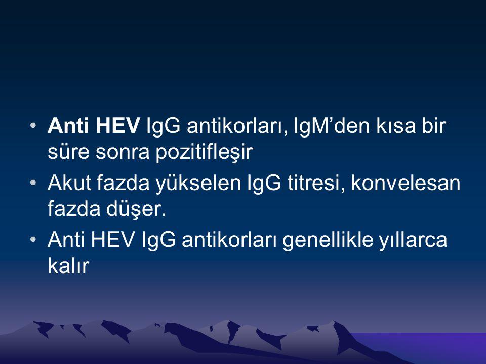 Anti HEV IgG antikorları, IgM'den kısa bir süre sonra pozitifleşir