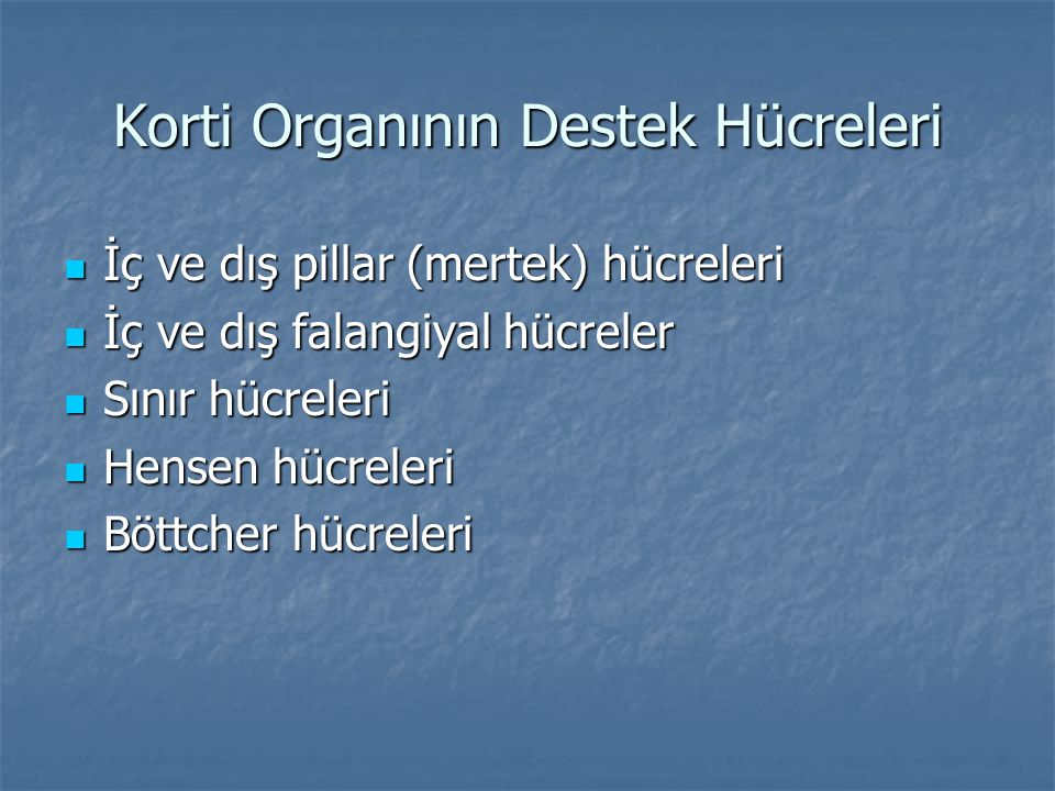 Korti Organının Destek Hücreleri
