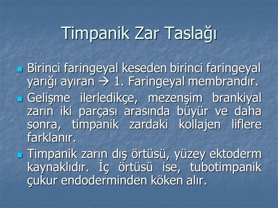 Timpanik Zar Taslağı Birinci faringeyal keseden birinci faringeyal yarığı ayıran  1. Faringeyal membrandır.