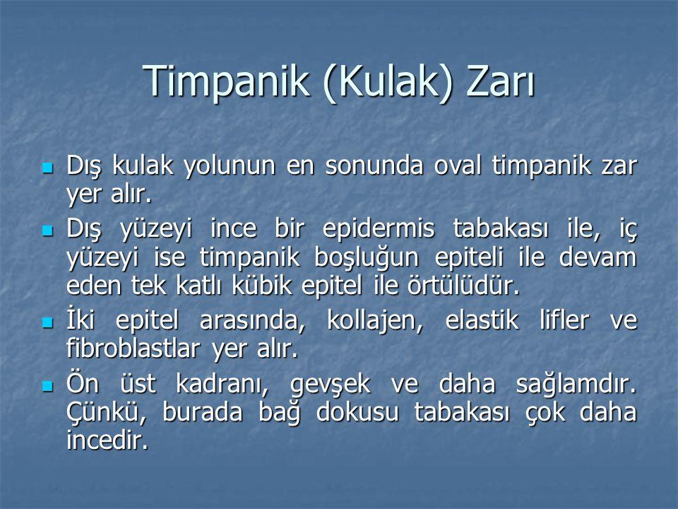 Timpanik (Kulak) Zarı Dış kulak yolunun en sonunda oval timpanik zar yer alır.