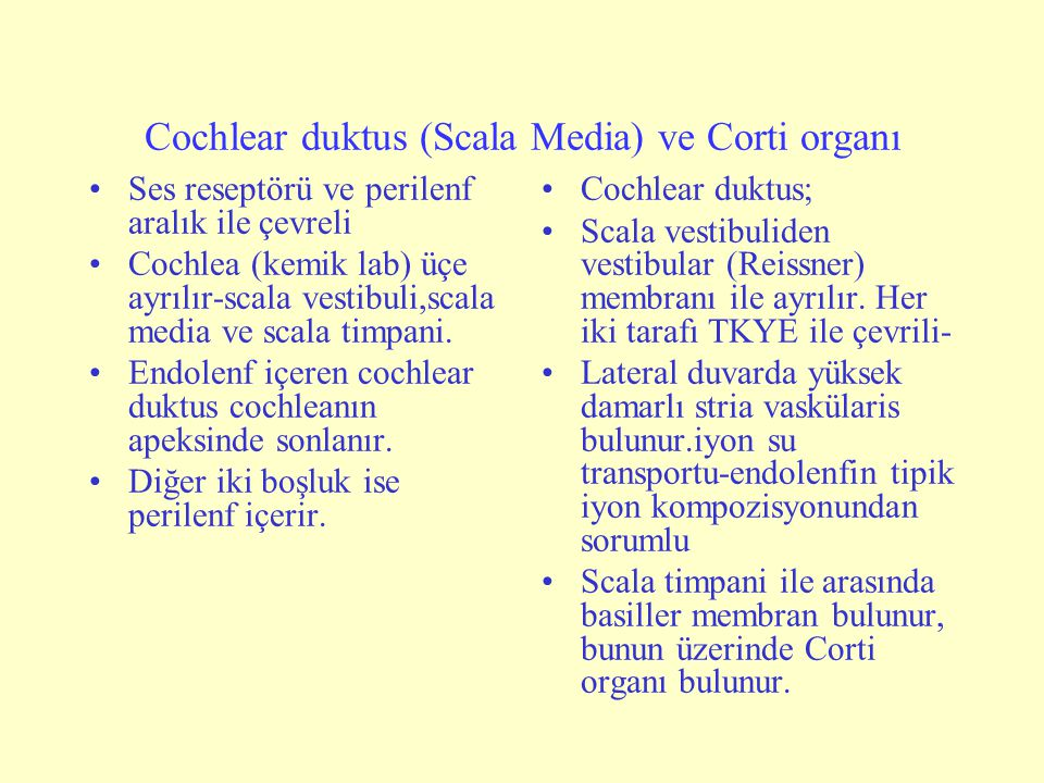 Cochlear duktus (Scala Media) ve Corti organı