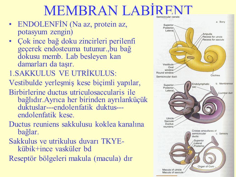 MEMBRAN LABİRENT ENDOLENFİN (Na az, protein az, potasyum zengin)