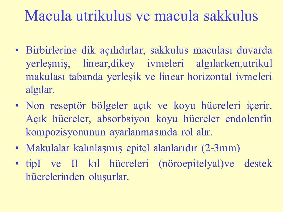 Macula utrikulus ve macula sakkulus