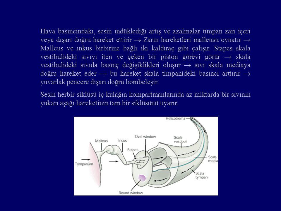 Hava basıncındaki, sesin indüklediği artış ve azalmalar timpan zarı içeri veya dışarı doğru hareket ettirir  Zarın hareketleri malleusu oynatır  Malleus ve inkus birbirine bağlı iki kaldıraç gibi çalışır. Stapes skala vestibulideki sıvıyı iten ve çeken bir piston görevi görür  skala vestibulideki sıvıda basınç değişiklikleri oluşur  sıvı skala mediaya doğru hareket eder  bu hareket skala timpanideki basıncı arttırır  yuvarlak pencere dışarı doğru bombeleşir.