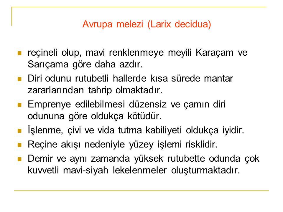 Avrupa melezi (Larix decidua)