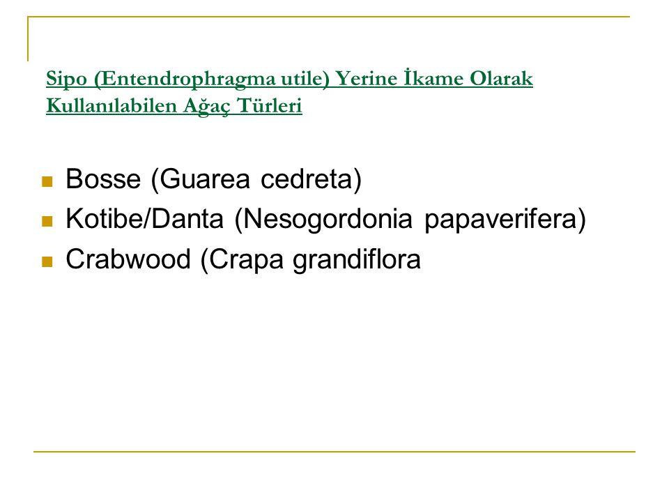 Bosse (Guarea cedreta) Kotibe/Danta (Nesogordonia papaverifera)