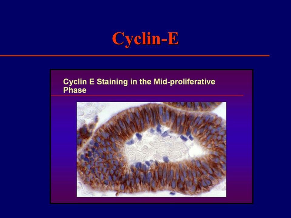Cyclin-E