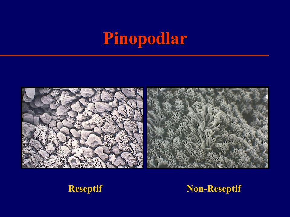 Pinopodlar Reseptif Non-Reseptif
