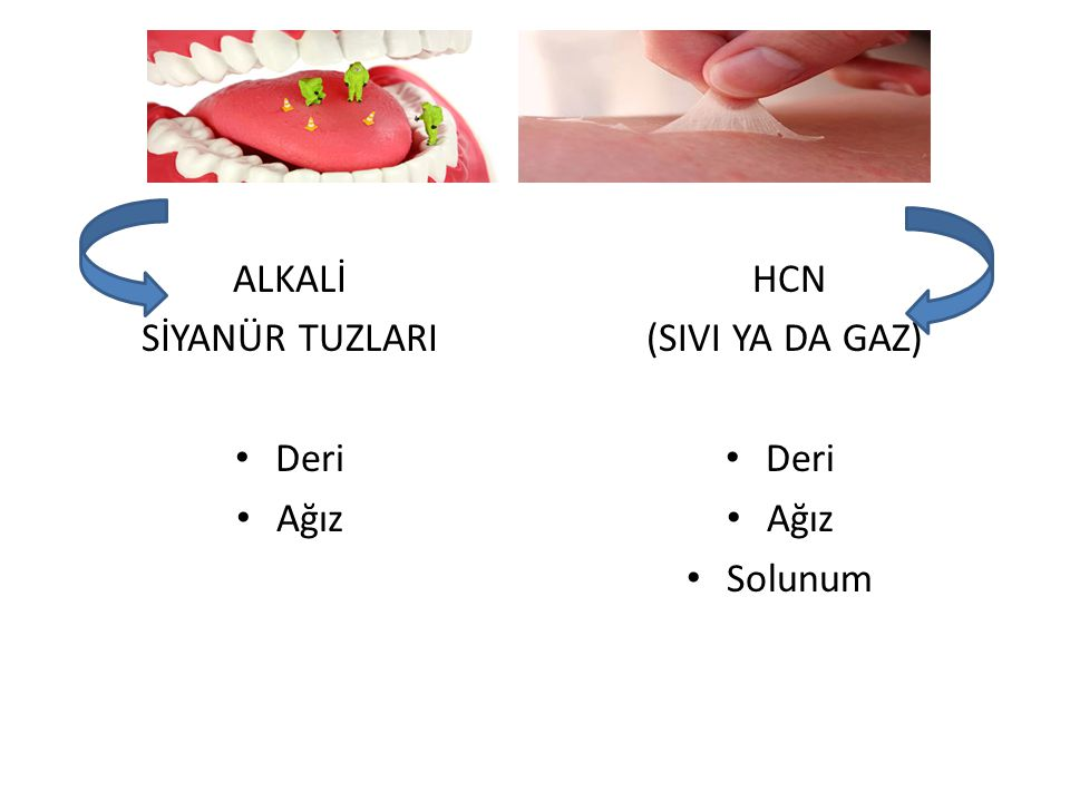ALKALİ SİYANÜR TUZLARI Deri Ağız HCN (SIVI YA DA GAZ) Deri Ağız