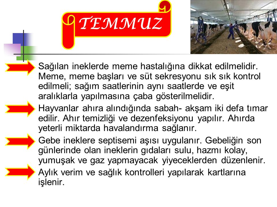 TEMMUZ