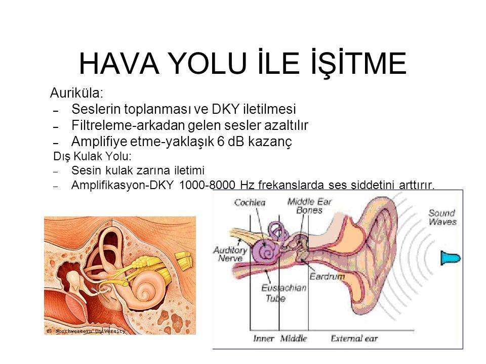 HAVA YOLU İLE İŞİTME Auriküla: Seslerin toplanması ve DKY iletilmesi