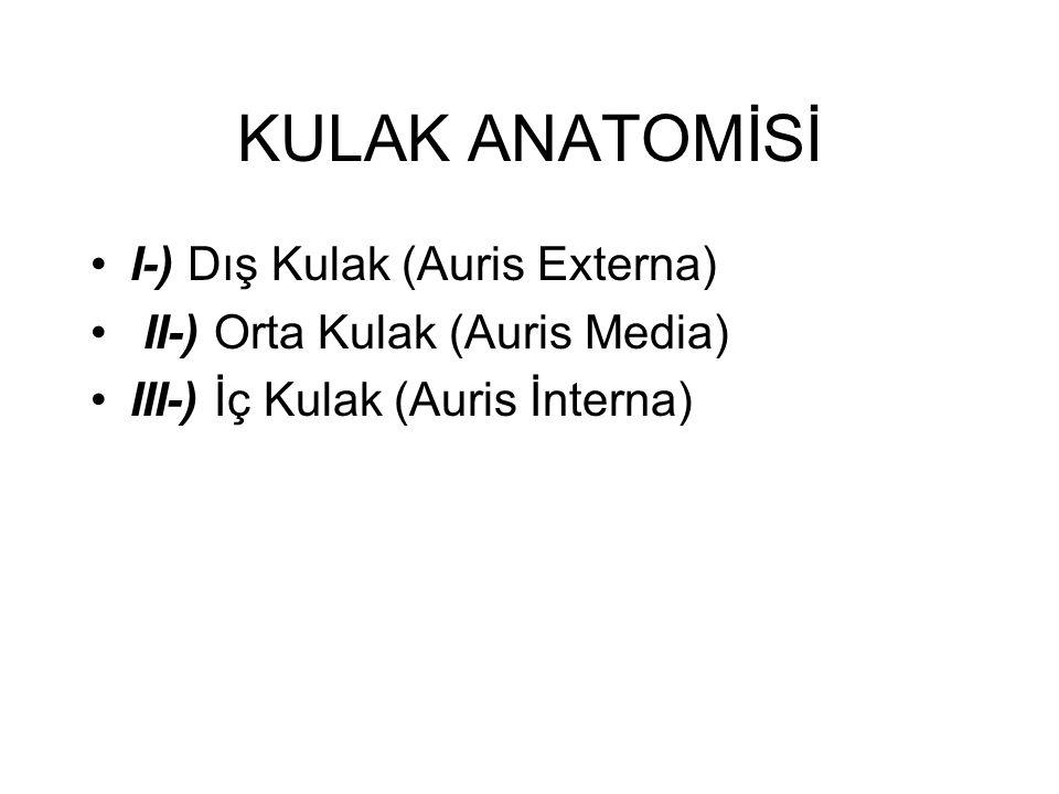 KULAK ANATOMİSİ I-) Dış Kulak (Auris Externa)