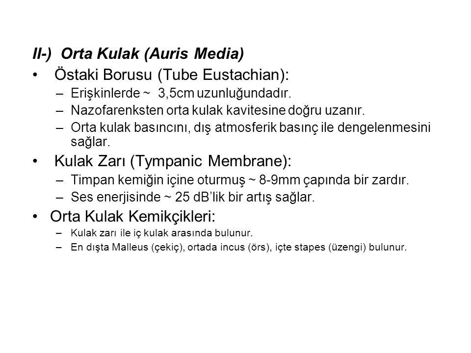 II-) Orta Kulak (Auris Media) Östaki Borusu (Tube Eustachian):