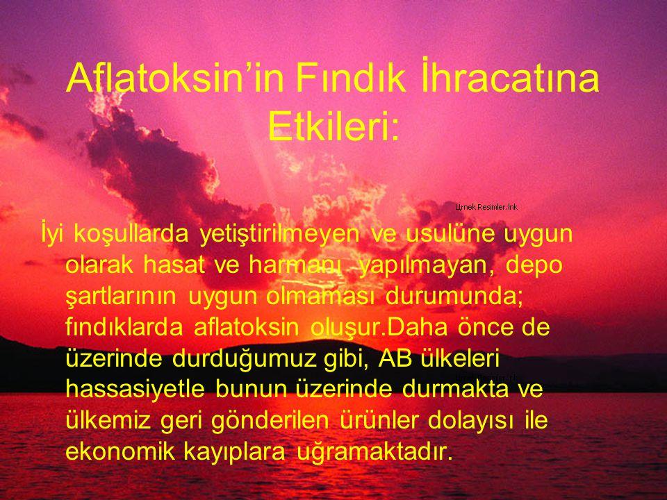 Aflatoksin'in Fındık İhracatına Etkileri: