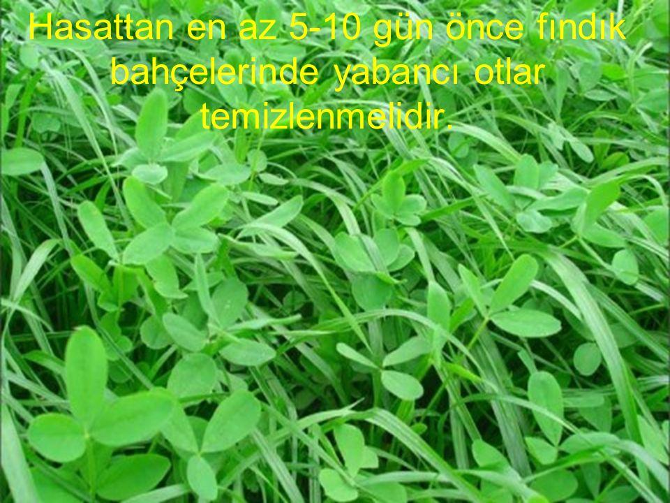 Hasattan en az 5-10 gün önce fındık bahçelerinde yabancı otlar temizlenmelidir.