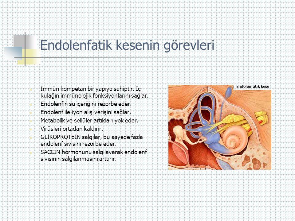 Endolenfatik kesenin görevleri