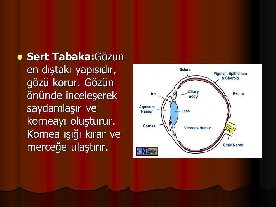 Sert Tabaka:Gözün en dıştaki yapısıdır, gözü korur