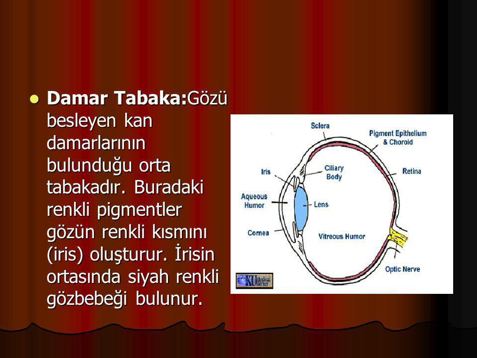 Damar Tabaka:Gözü besleyen kan damarlarının bulunduğu orta tabakadır