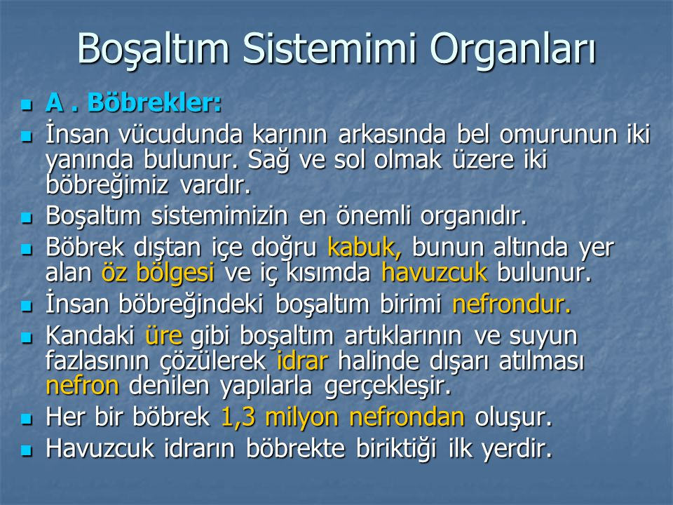 Boşaltım Sistemimi Organları