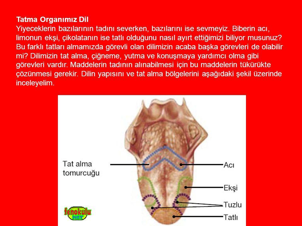 Tatma Organımız Dil