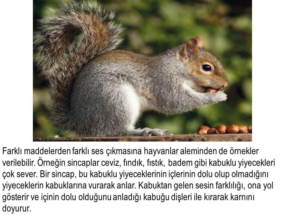 Farklı maddelerden farklı ses çıkmasına hayvanlar aleminden de örnekler verilebilir.